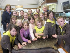 Brownies at Rothesay Museum